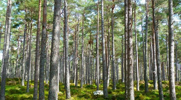 Лесные насаждения